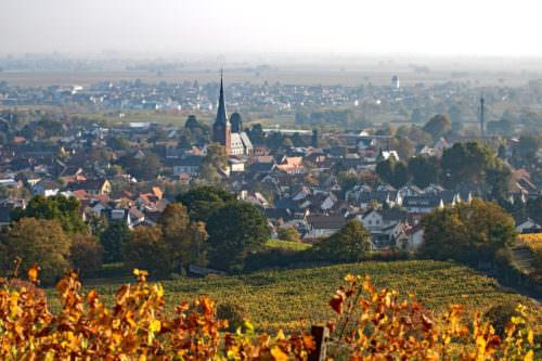 Weinbauregion Pfalz bei Deidesheim - Vino Culinario