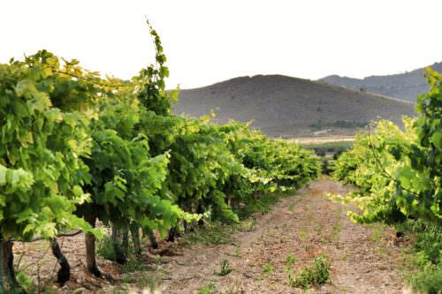 Weinregion Jumilla in Murcia, Spanien - Vino Culinario