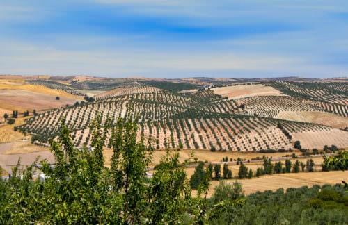 Weinbau in Andalusien - Vino Culinario