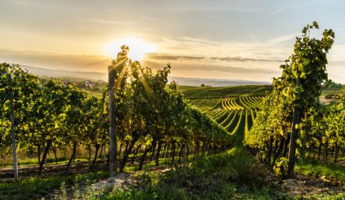 Rheinhessen und seine wunderschöne Weinlandschaft - Vino Culinario