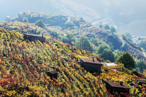 Weinreben in Ribeira Sacra, Galicien, Spanien - Vino Culinario