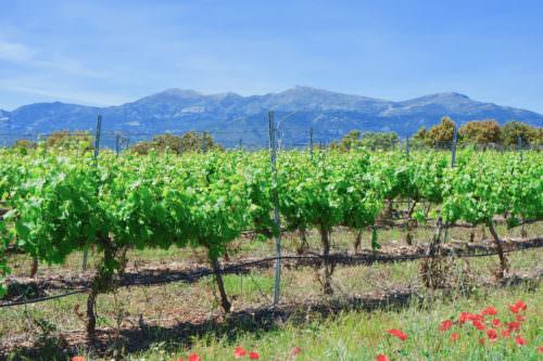 Weinbau bei Barbastro, Somontano, Aragonien, Spanien