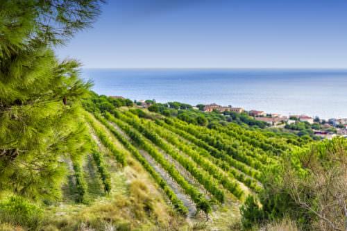 Weinbau bei Alella in Katalonien, Spanien - Vino Culinario