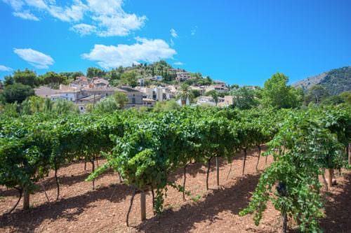 Weinbau auf den Balearen - Vino Culinario