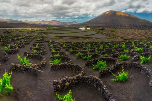 Weinbau auf Teneriffa, Kanarische Inseln, Spanien - Vino Culinario