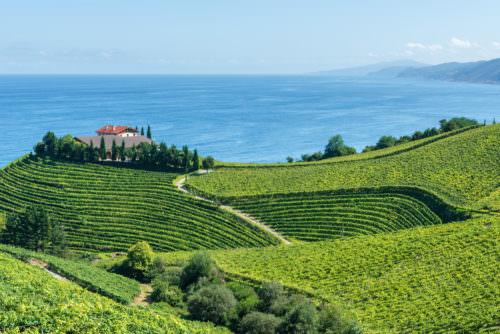 Weinbaugebiet Baskenland, Pais Vasco Bodega bei Getaria - Vino Culinario