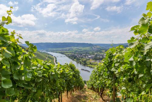 Spezielles Klima für besondere Auslesen (Riesling) - Vino Culinario