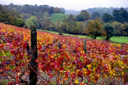 Weinberge in Cangas de Narcea, Asturien, Spanien - Vino Culinario