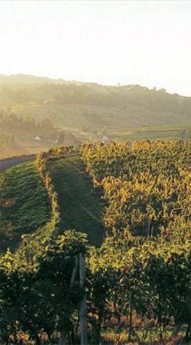 Weinanbau im Steirerland - Vino Culinario