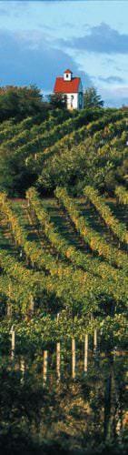 Weinbaugebiet Thermenregion (Österreich) - Vino Culinario