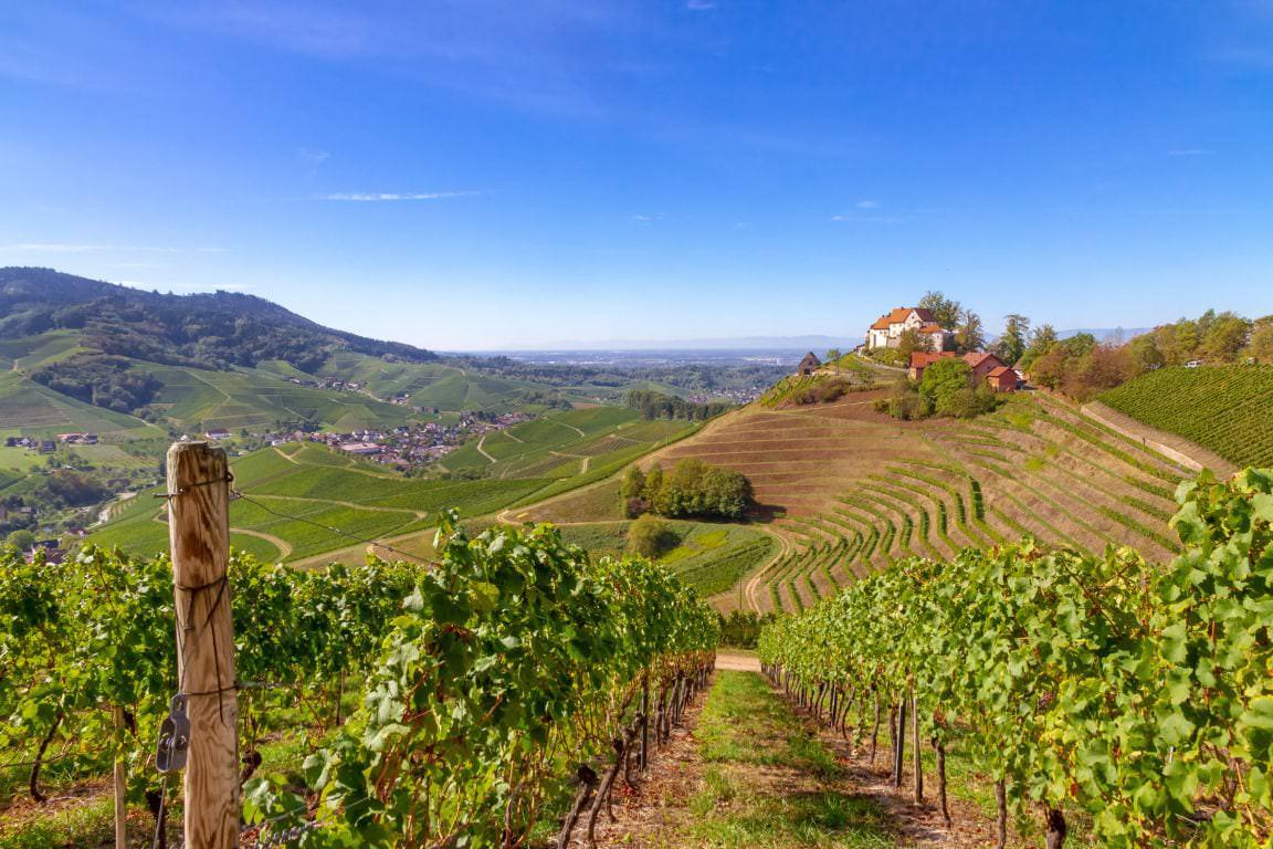 Aussicht auf Schloss Staufenberg bei Durbach im Schwarzwald, Badische Weinstraße - Vino Culinario