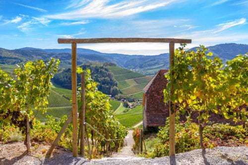 Badischer Weinkulturpfad Vino Culinario