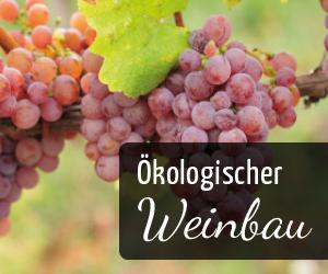 Ratgeber - Ökologischer Weinbau - Vino Culinario