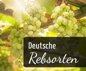 Deutsche Rebsorten - Vino Culinario