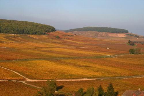 Côte d'Or (Goldene Hänge) – Das Herzstück des Burgund - Vino Culinario