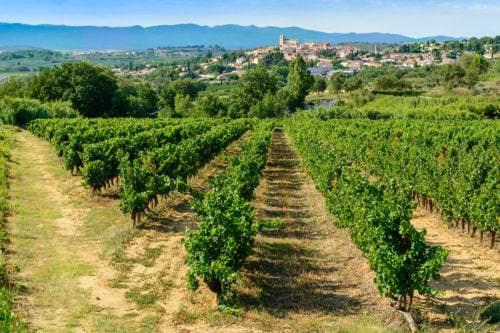 Weinberge vor der Stadt Béziers im Département Hérault - Vino Culinario