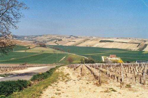 Aufgrund seiner großen Fläche weist das Val de Loire beträchtliche geologische Unterschiede auf. - Vino Culinario