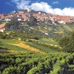 Atemberaubende Weinlandschaft im Val de Loire - Vino Culinario