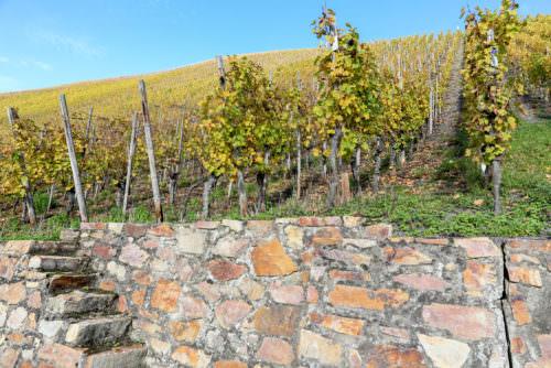 Weinbau an den Steillagen im Nahetal - Vino Culinario