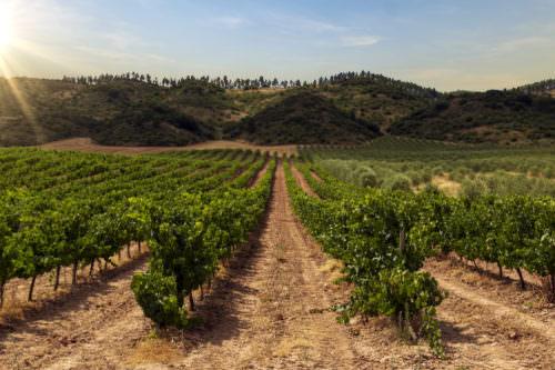 Navarra Weinbaugebiet Spanien, Pilgerroute Santiago de Compostela - Vino Culinario