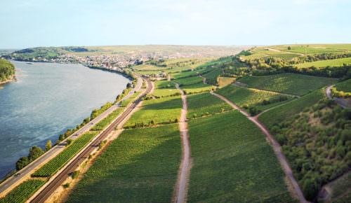 Rheinhessen ist das größte Weinanbaugebiet Deutschlands - Vino Culinario