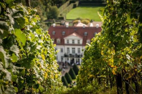 Weinberge am Schloss Wackerbarth - Vino Culinario