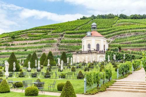 Weinbau an den Steilterrassen des Wackerbarth - Vino Culinario