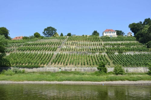 Die Weinterrassen im Elbetal bei Dresden - Vinco Culinario