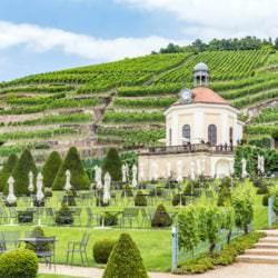 Vino Culinario - Weinbaugebiet Sachsen