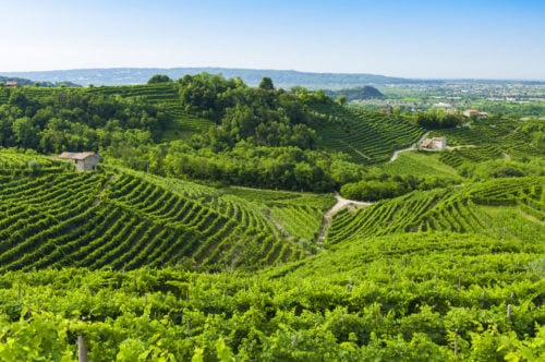 Weinberge im Weinanbaugebiet Abruzzen (Italien)