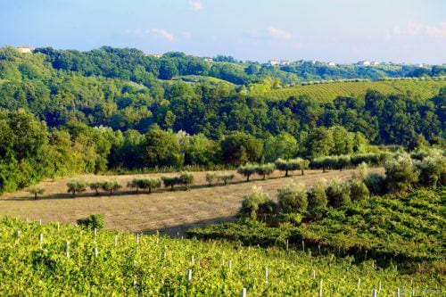 Das italienische Weinbaugebiet Molise - Vino Culinario