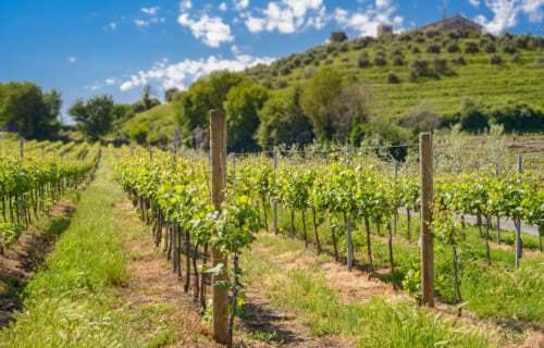 Weinbau in der italienischen Region Latium (Lazio) - Vino Culinario