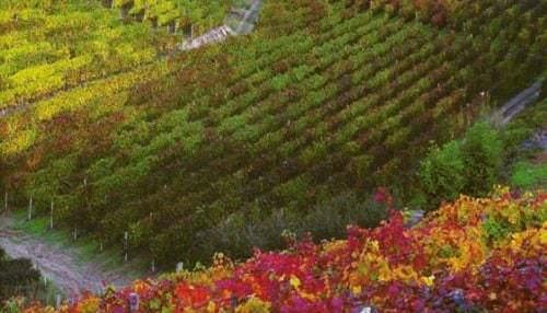 Weinbau in Italien - Vino Culinario
