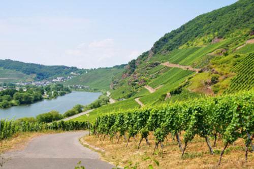 Weinbau am Steilhang (Mosel)