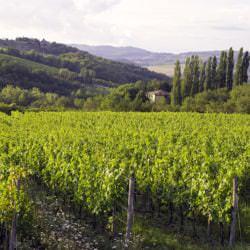Atemberaubende Weinlandschaft in der Toskana (Italien) - Vino Culinario