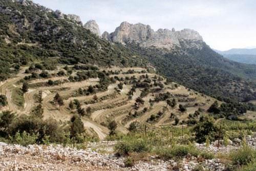 Weinberge in steiler Hanglage zur Rhône - Vino Culinario