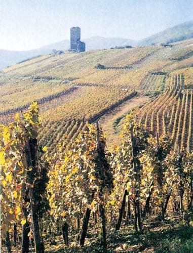 Weitläufige Weinlandschaft im Elsass - Vino Culinario