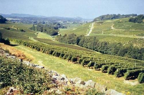 Die weitläufige Weinlandschaft des Jura - Vino Culinario