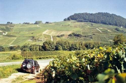 Kalkböden dominieren das hügelige und bergige Terrain - Vino Culinario