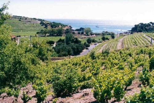 Weinbau am Mittelmeer - Vino Culinario