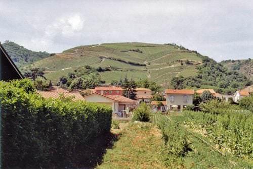 Faszinierende Weinlandschaft mit unterschiedlichen klimatischen Verhältnissen. Heiße Sommer im Süden, eisige Winter im oberen Rhônetal. - Vino Culinario