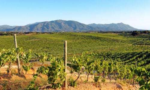 Weinbauregion Korsika - Vino Culinario