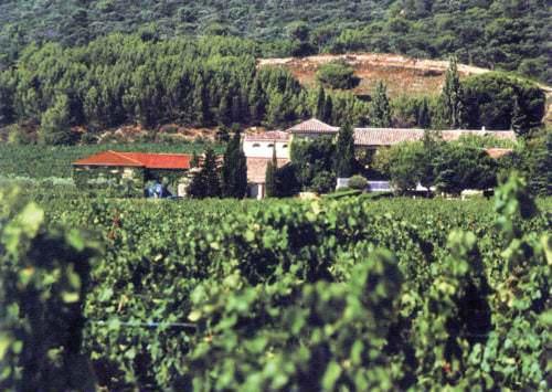 Schon die Römer entdeckten vor gut zwei Jahrtausenden das Potential des Rhône-Tals für guten Wein. - Vino Culinario