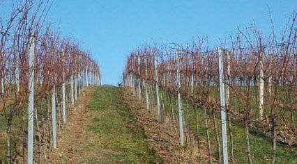 Weinanbaugebiet Wien - Vino Culinario