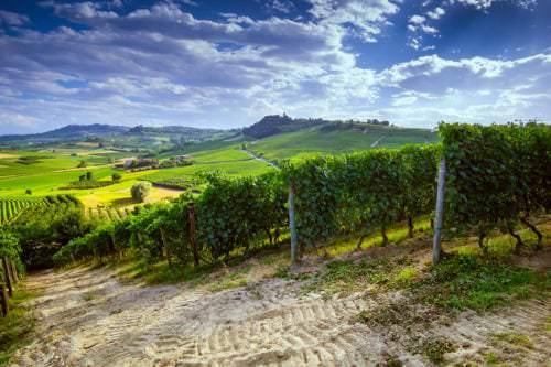 Blick auf die Weinberge in der Weinbauregion Piemont - Vino Culinario
