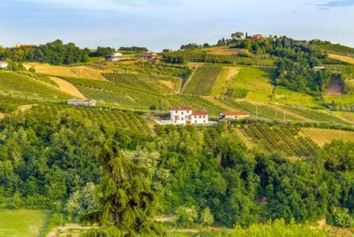 Blick auf die Weinlandschaft in der Emilia-Romagna - Vino Culinario