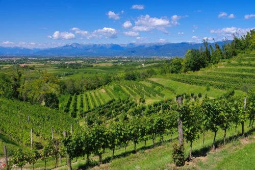 Weinlandschaft Friaul-Julisch Venetien - Vino Culinario