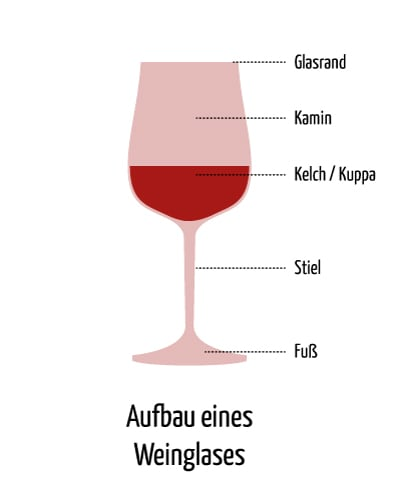 Glasaufbau Struktur Weinglas - Vino Culinario