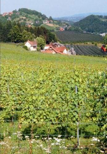 Weinlandschaft Österreich - Vino Culinario