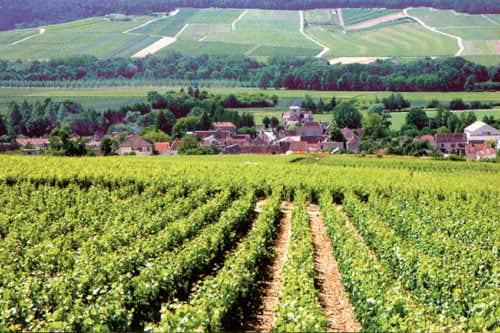 Blick auf die Weinlandschaft in der Champagne - Vino-Culinario